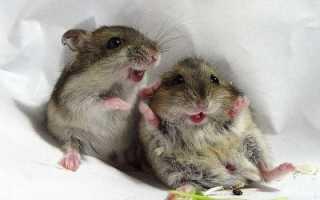 Чем обработать пенопласт чтобы не ели мыши