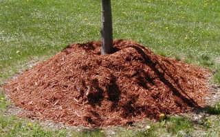 Как утеплить молодые саженцы плодовых деревьев